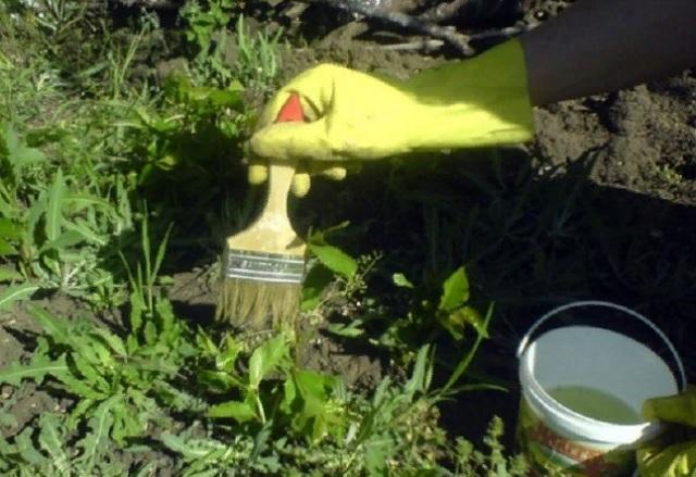 Как избавиться от сорняков с помощью уксуса?