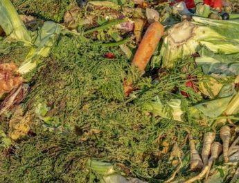 Растения отходы для огорода